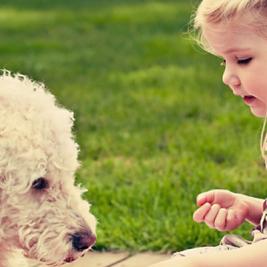 Cómo tu perro te dice que te ama