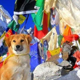 Rupee, el primer perro en escalar el Everest