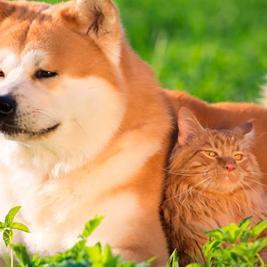 El perro más leal de todos los tiempos