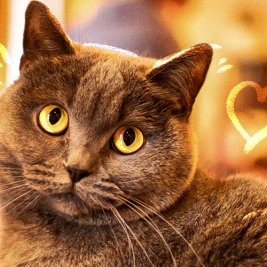 Cosas que tal vez no sabes de tu gato