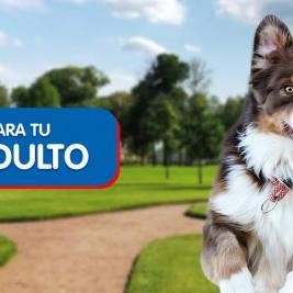 Ejercicios para tu perro adulto