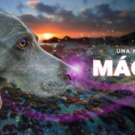 El increíble olfato de tu perro