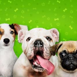 ¿Hay perros o razas que no se llevan bien?