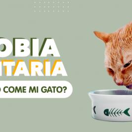Neofobia alimentaria ¿es por eso que no come mi gato?