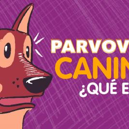 Parvovirus canino, ¿qué es?