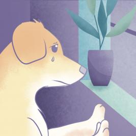 ¿Qué pasa si no sacas a pasear a tu perro?