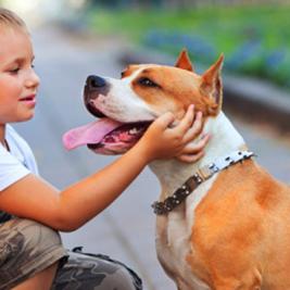 Mostrándole a tu perro cómo debe sociabilizarse